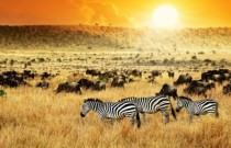 Key Trends Driving Growth in Tourism and Travel in Africa