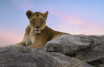 ASPIRE Pick of the Week: An African Safari With NatGeo Photographers
