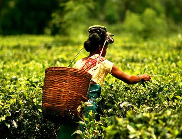 Tanzanian Tea