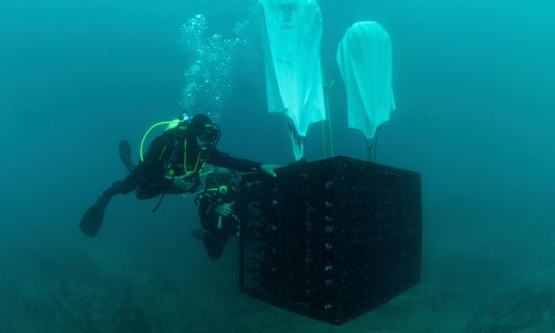One of the popular underwater wineries, Crusoe Treasure Winery lowering bottles into the sea