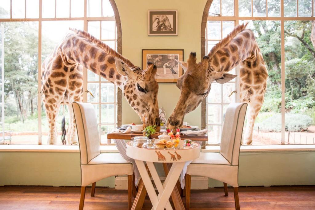 The Africa Adventure Consultants safari will visit the Giraffe Manor in Kenya