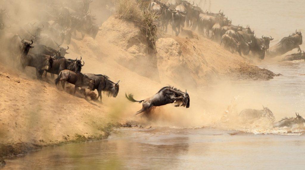 The Great Migration at the Maasai Mara National Reserve