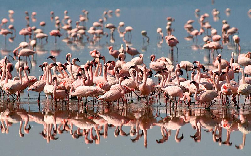 Ngorongoro is home to different bird species