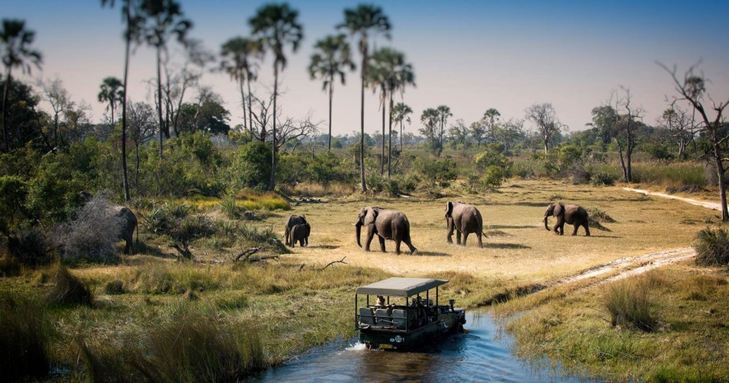 Chobe National Park houses the largest elephant population in Africa
