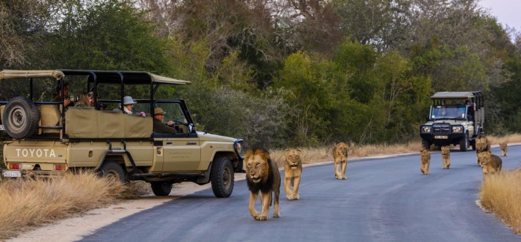 Safari sighting at Kruger National Park